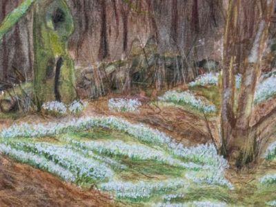 Ruth Boddie - Mixed medium -  Snowdrops at Mugdock